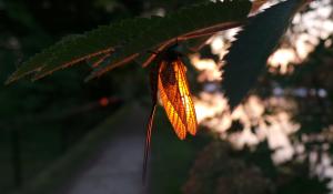 Mayfly Sunset_HSloper1